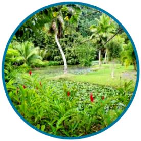 Vaipahi Garden